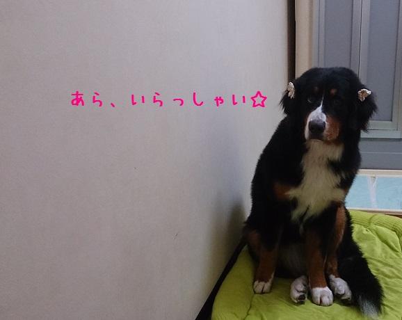 Dsc_3892_2